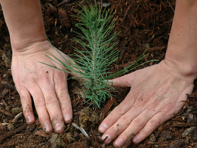 Reaping the Benefits of Going Green