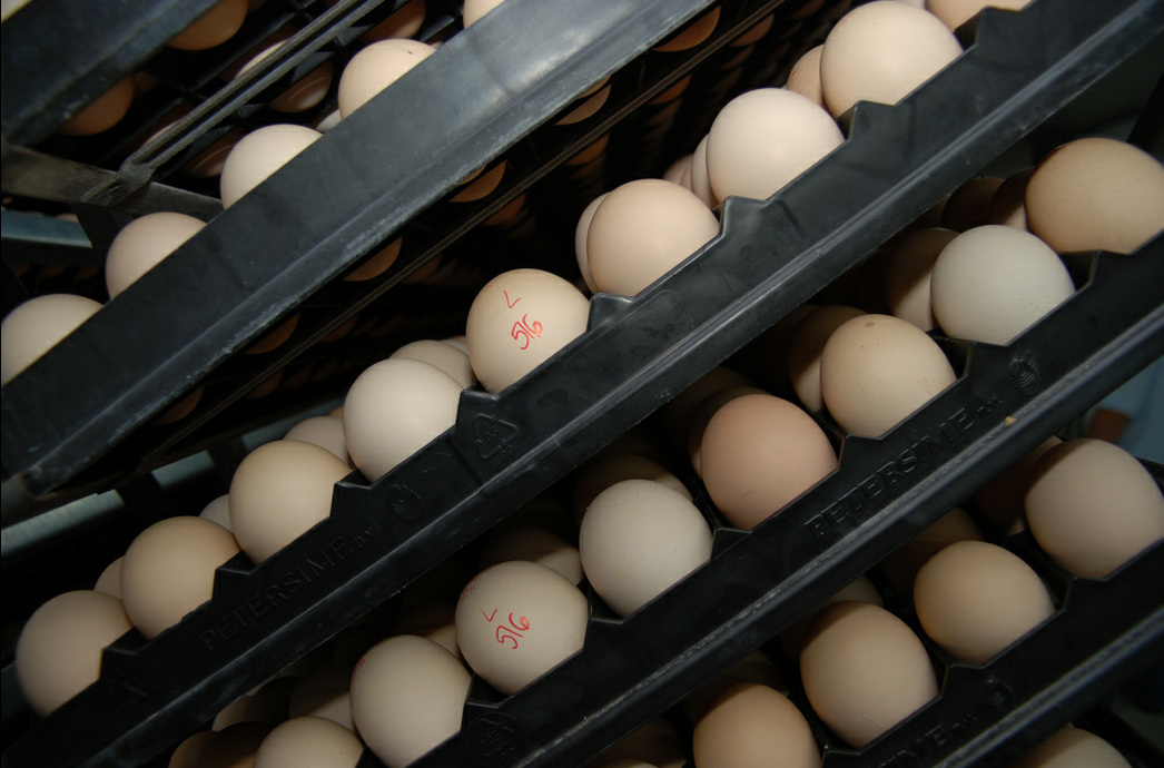 What Your Eggs Aren't Telling You: Egg Facts