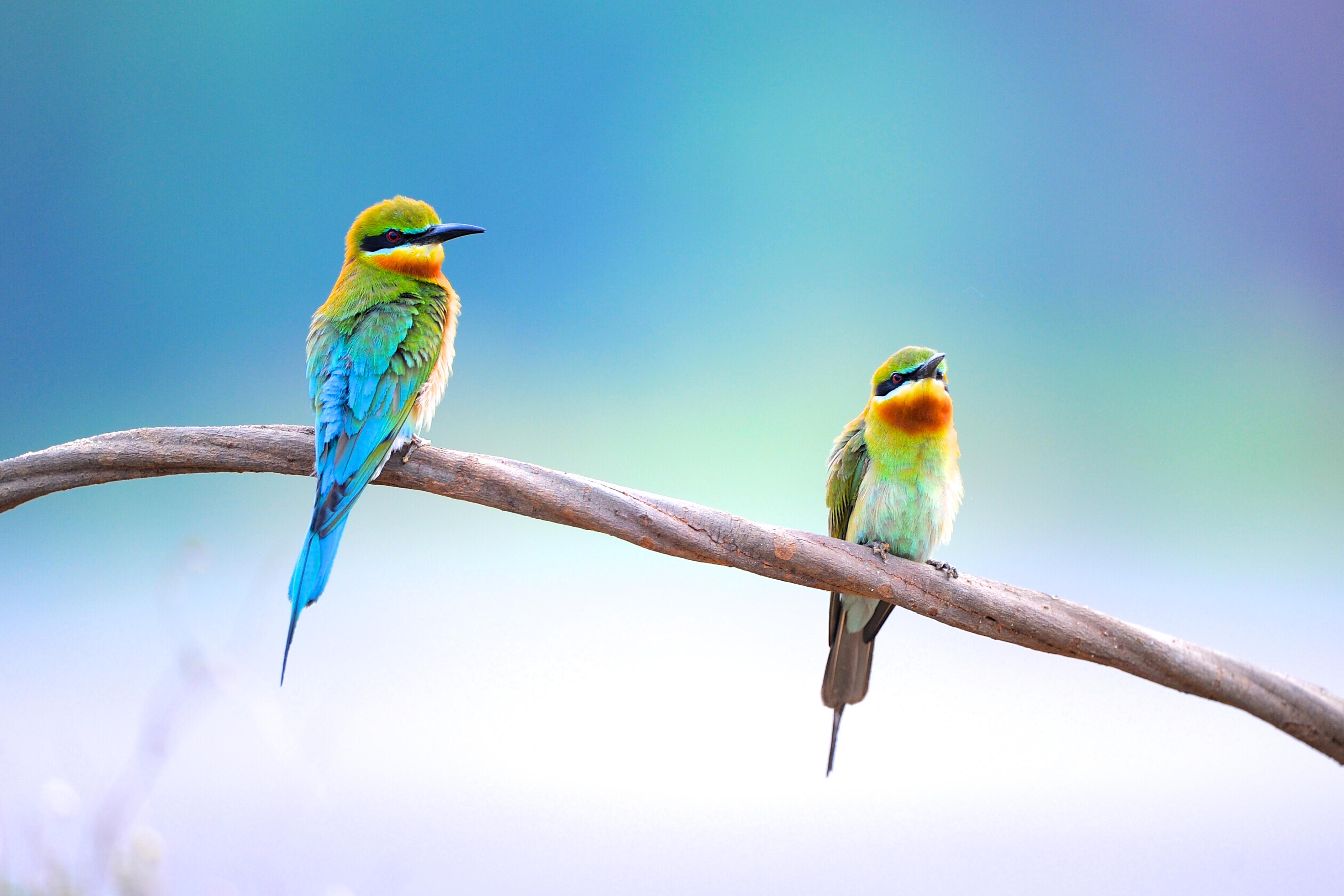 The Audubon Society Gets It