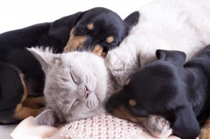Best Friends Animal Society helps save lives.