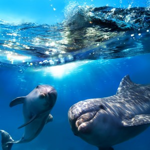Plastic waste kills many dolphins and other sea creatures each year.