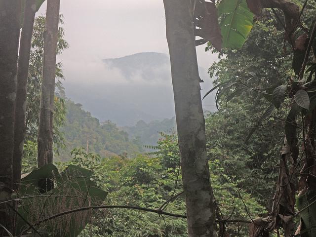 Missing Thai Environmental Activist Causes Outcry