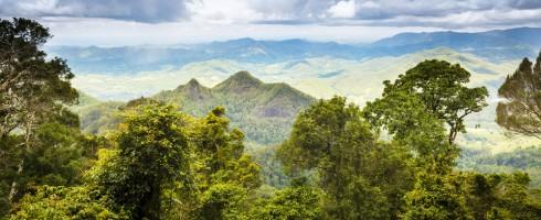 queensland-australia-rainforest