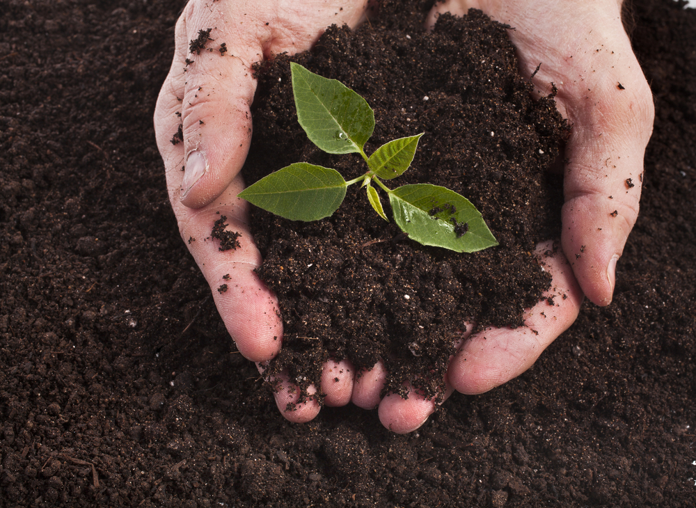 The world s soil quality is degrading environmental watch for From the soil