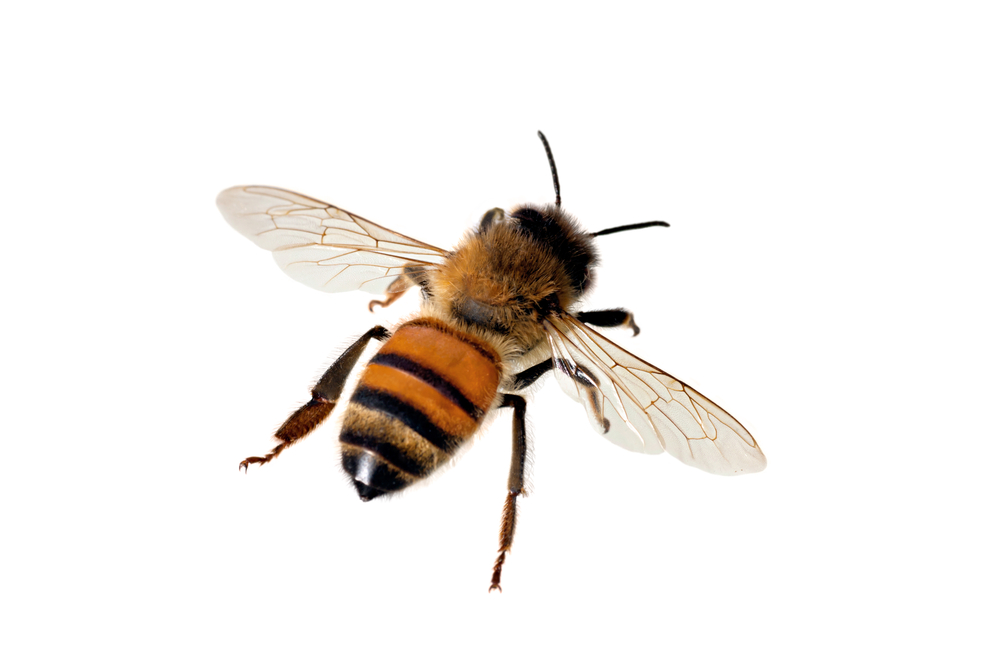 Study Illustrates Importance of Bee Biodiversity