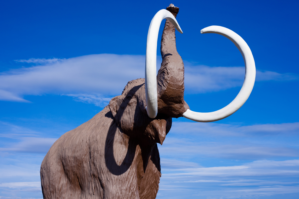 Climate Change Helped Kill the Wooly Mammoth