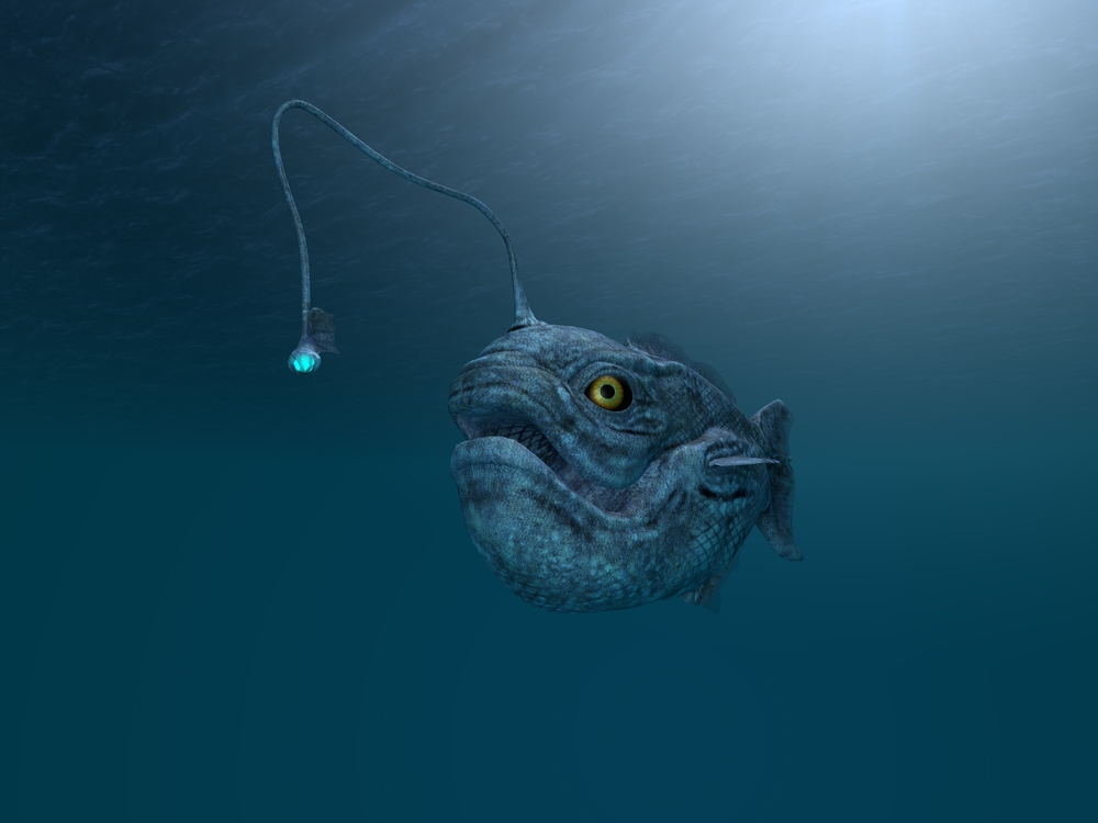 Researchers discover new anglerfish species for What is an angler fish