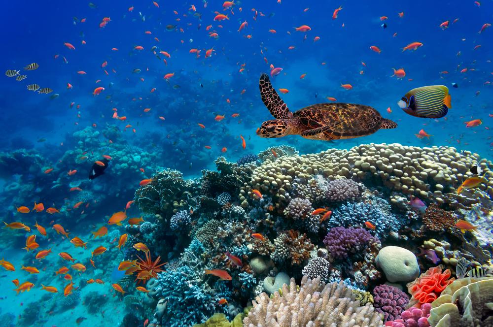 Rising Oceans Temperatures Threaten Global Biodiversity ...