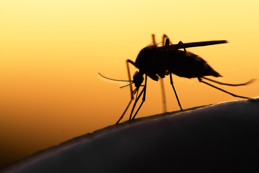 Chinese Medical Scientist Tu Youyou Calls for Joint Efforts to Tackle Malaria
