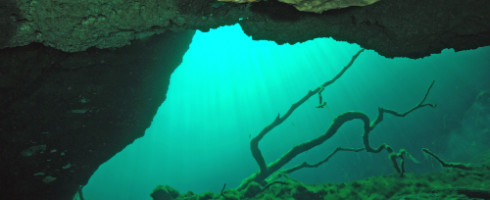 An underwater cave with a sea floor and a tree branch