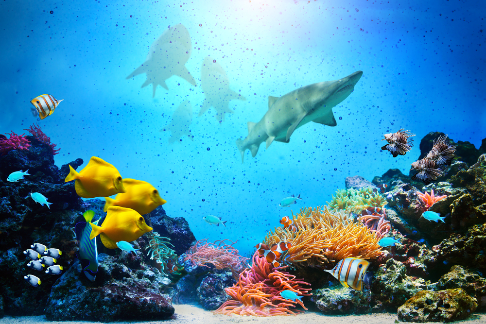 Nutrient Cycles in Coral Reefs Depend on Big Fish - Environmental Watch
