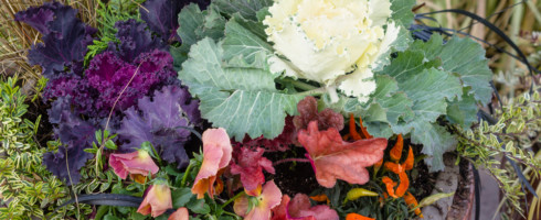 Fall garden crops