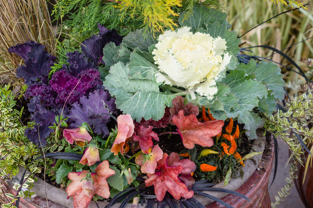 A Quick Fall Vegetable Planting Primer