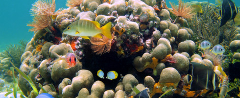 Mote Marine Laboratory and The Nature Conservancy will work together to restore coral reefs.