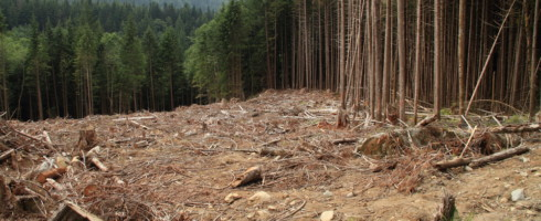 Clear-cutting forests could release tons of carbon into the atmosphere.