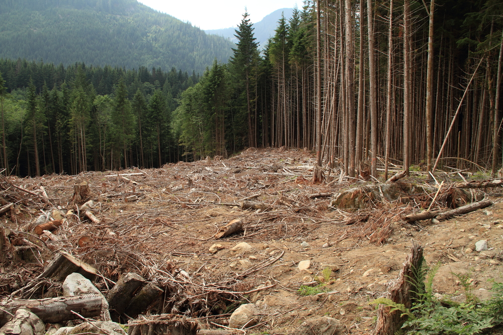 Clear-Cutting Forests Could Release Tons of Carbon into the Atmosphere