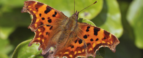 Butterflies are being profoundly affected by climate change.