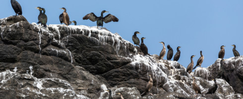 Seabird guano contributes to Arctic cloud cover.