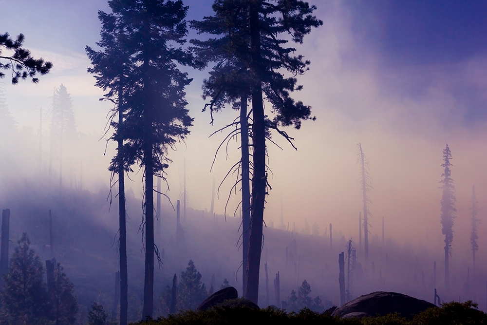 Humans Have Dramatically Increased Wildfire Damage
