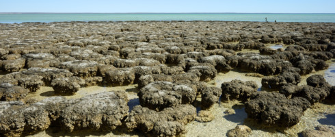 "Scientists are using ""big data"" to study the decline of stromatolites. Big data could help with synthesis and research on many subjects, including climate change."